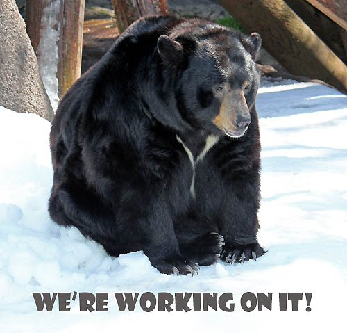 Our Bear Mascot is Working on this Page.